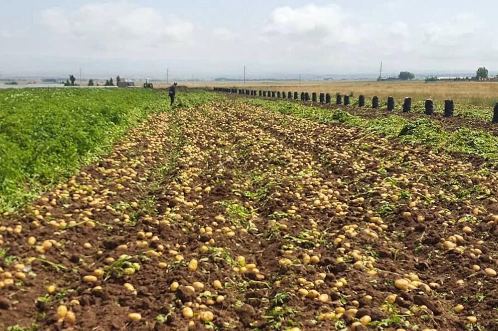 یادداشت ویژه | رونق کشاورزی زمینه ایجاد اشتغال پایدار در شوشتر و گتوند
