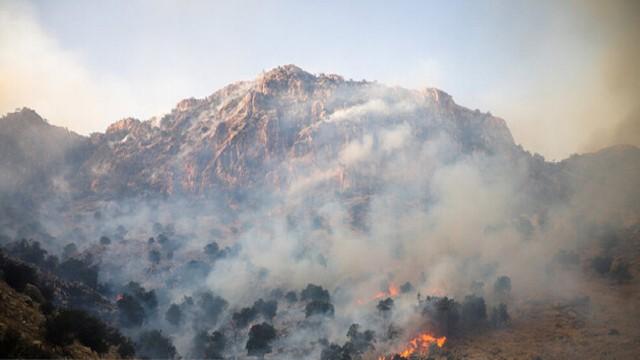 اختلاف طایفهای منجر به آتش سوزی عمدی و سوختن درختان بلوط در جنگلهای زاگرس در شهرستان دزفول شد