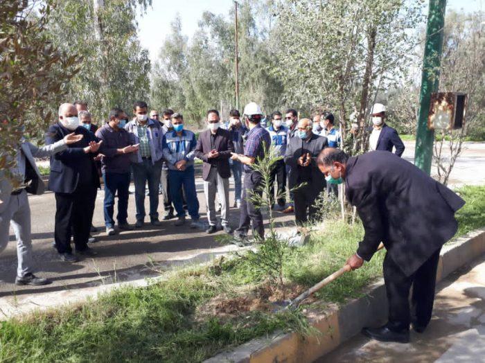 خبرهای خوش محیط زیستی و درختکاری به مناسبت هفته هوای پاک در کارخانه سیمان مسجدسلیمان +تصاویر