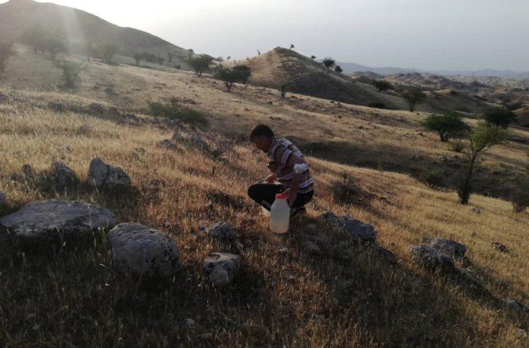 آبیاری نهال ها در روستای چال استران به همت دوستداران طبیعت مسجدسلیمان+ تصاویر