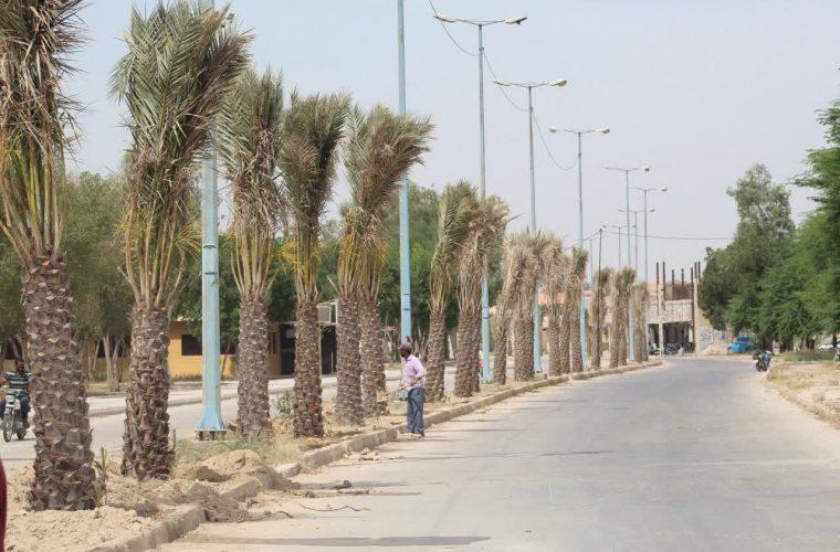 شهردار هندیجان خبر داد: کاشت نخل های مثمر در بلوار های هندیجان آغاز شد