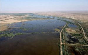 حال و روز تالاب هورالعظیم پس از رهاسازی آب / شلتوکهایی که آب را میبلعند